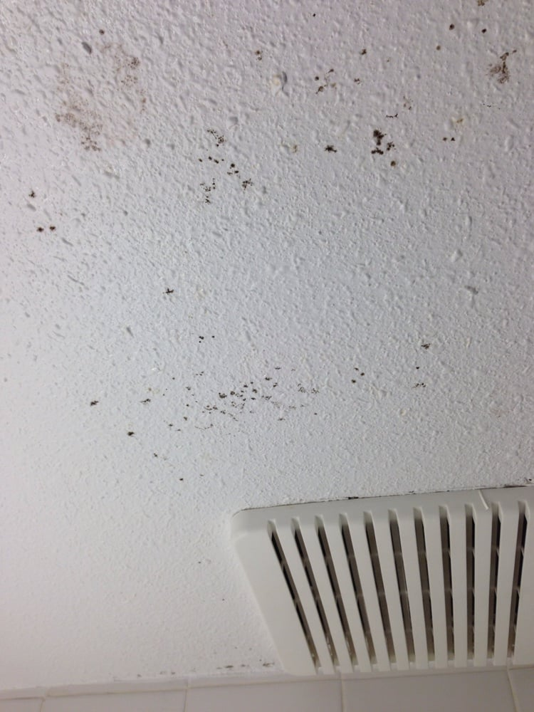 black mold all over the bathroom ceiling and walls. - yelp