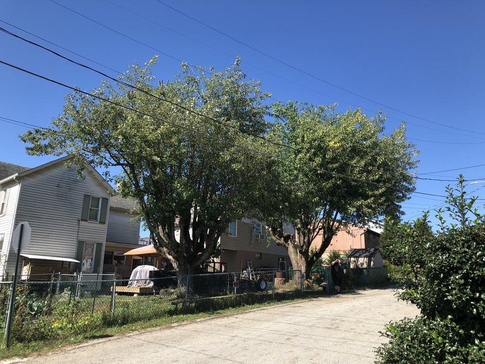 RBJ Tree Service: 540 State St, Clairton, PA