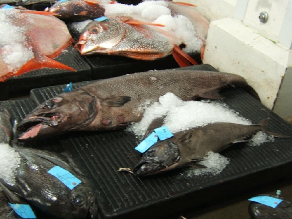 Walu or escolar better known as super white tuna yelp for United fishing agency