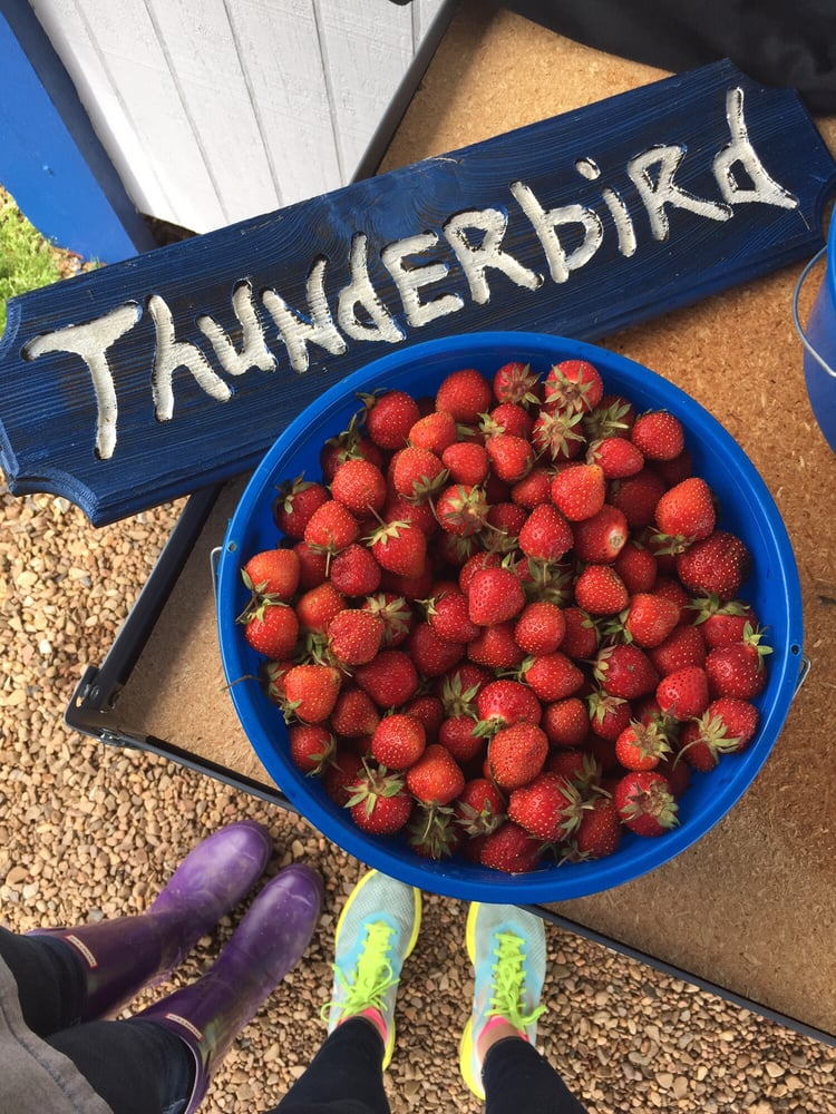 Thunderbird Berry Farm: 7515 S 321st E Ave, Broken Arrow, OK