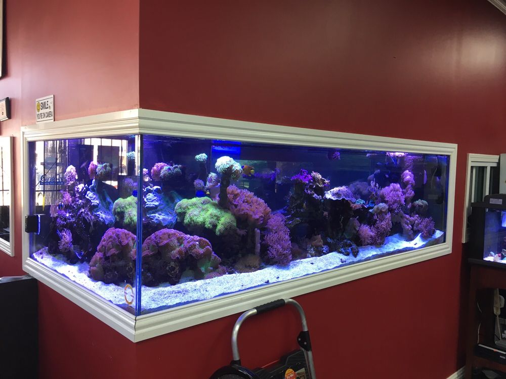 T&T Fish and Reef: 9470 Hwy 6 S, Houston, TX