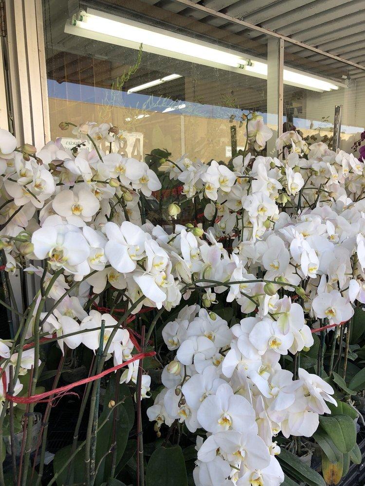 Orchidholic: 686 Brannan St, San Francisco, CA