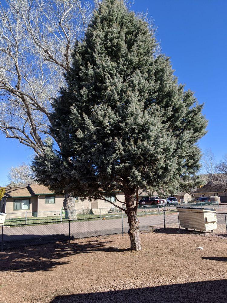 Bob Lee & Sons Tree Service: 305 W Oxbow Trl, Payson, AZ