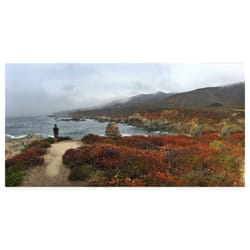 California sea otter game refuge 22 photos beaches for The refuge carmel