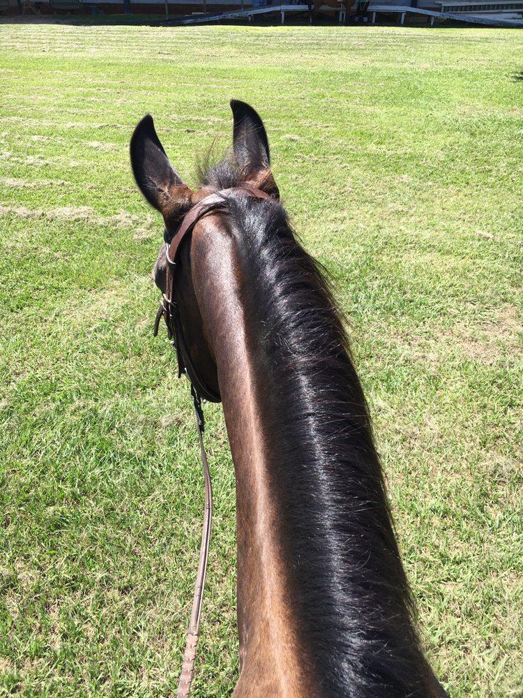 Southern Breeze Equestrian Center: 3801 Fm 521 Rd, Fresno, TX