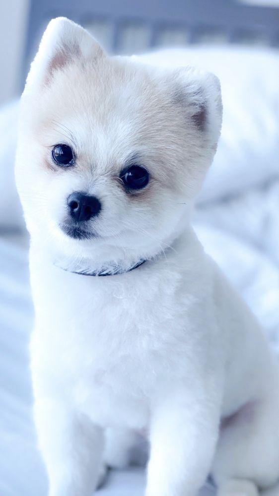 Le Chien Pet Spa