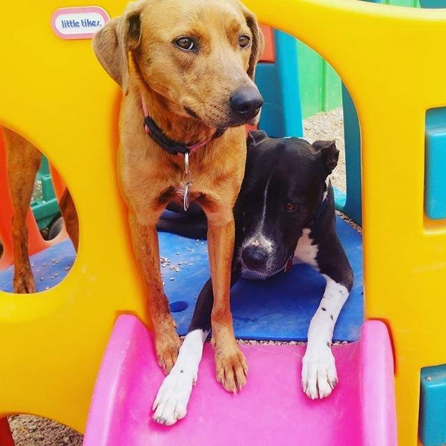 Ace Dog: 4891 Washington St, Denver, CO
