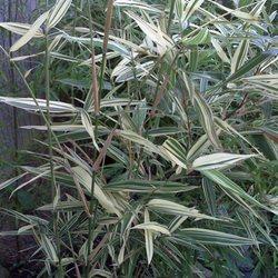 Llc In Nc >> Apex Bamboo Llc New 10 Photos Nurseries Gardening 1201