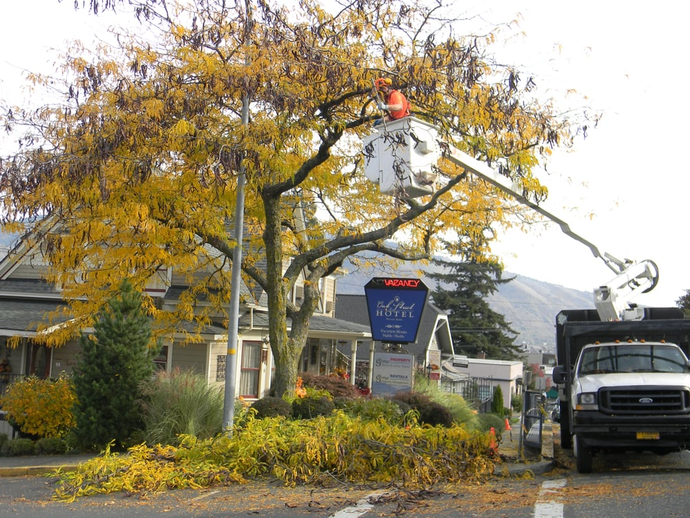 Photo Of Gorge Tree Surgeon Hood River Or United States Thornless Honey