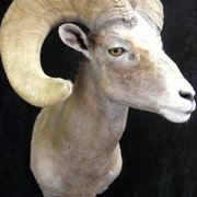 Photo Of T Basix Taxidermy Rugmaking Tucson Az United States