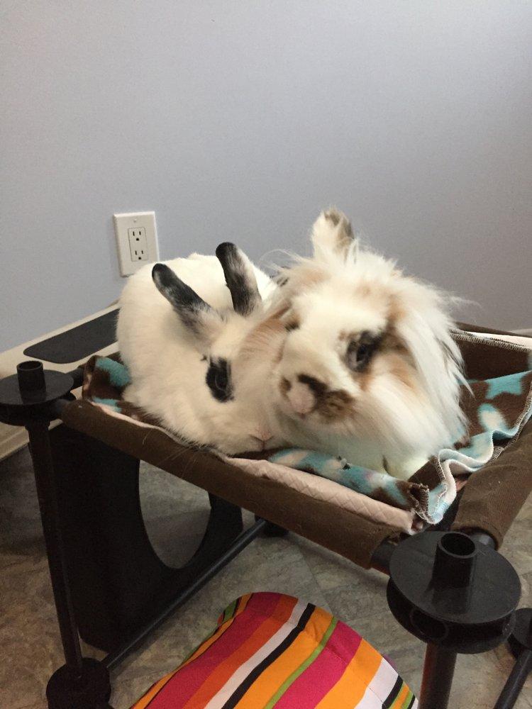Bunny whisperer 83 foto e 13 recensioni addestramento - Finestra di overton ...