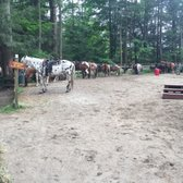 Ruggiero's Horseback Riding and Cabin rentals - 31 Photos