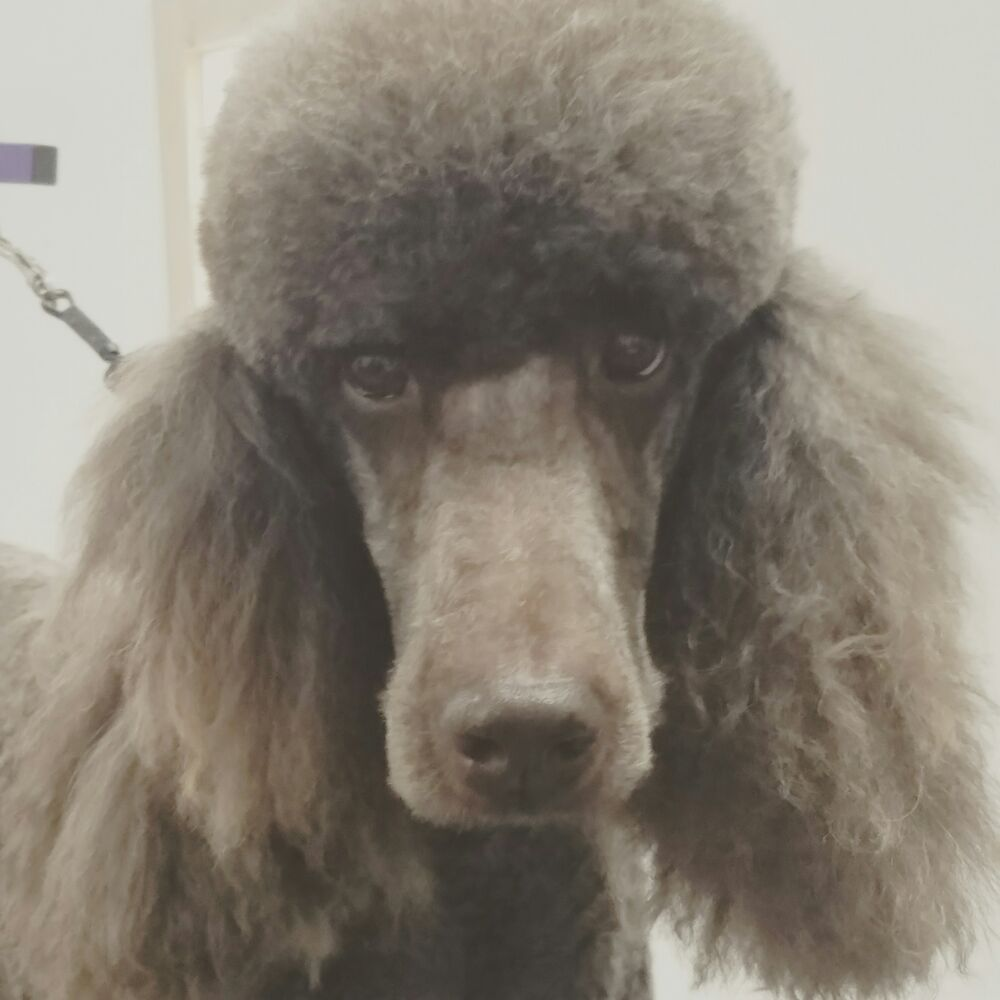 Misty S Dog Grooming Crescent City