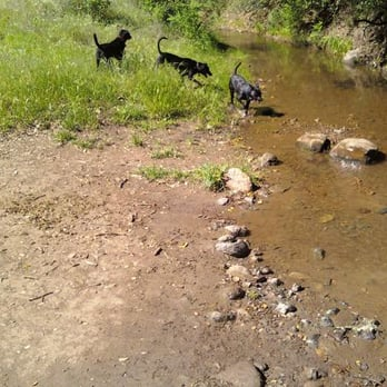 Diablo Foothills Park Walnut Creek Dogs