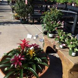 Photo Of Summerwinds Nursery Country Club Mesa Az United States Marshmallow