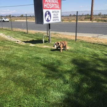 Antelope Valley Animal Hospital   52 Reviews   Veterinarians   1326 W Ave  N, Palmdale, CA   Phone Number   Yelp