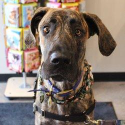 Chuck Dons Pet Food Supplies 16 Reviews Pet Stores 335