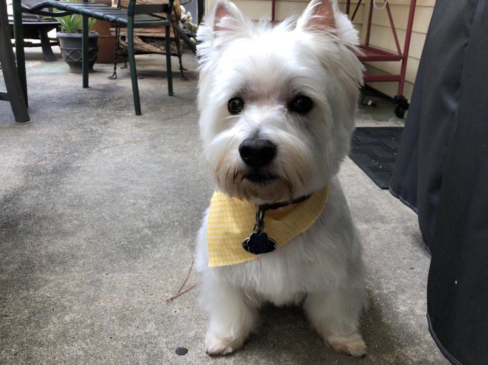 Poochie Bella's Pet Grooming: 732 Westbank Expy, Gretna, LA