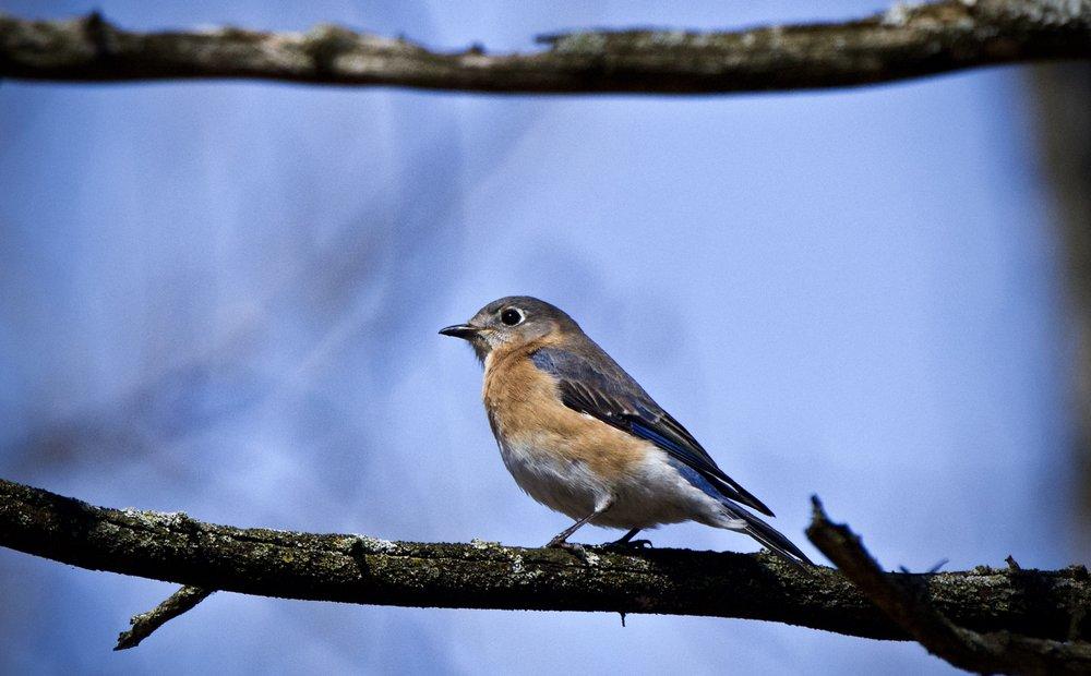Severson Dells Nature Center: 8786 Montague Rd, Rockford, IL