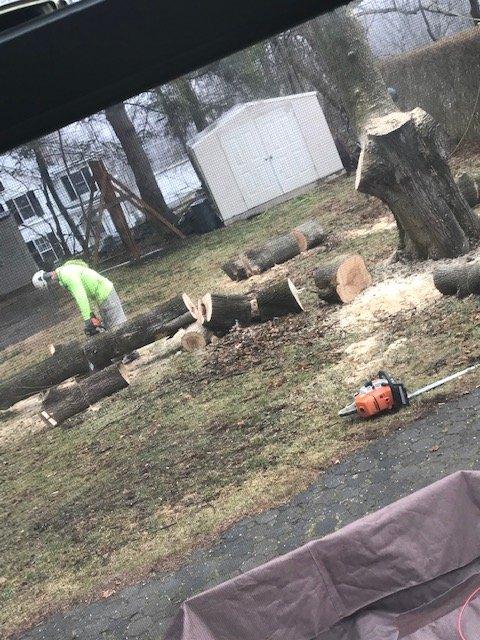 Suyker Tree Care: Oxford Township, NJ