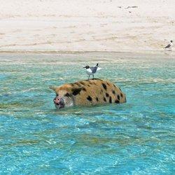Exuma Bahamas Boat Tours - Island Boy Adventures - Resorts