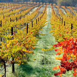Photo of Frey Vineyards - Redwood Valley CA United States & Frey Vineyards - Wineries - 14000 Tomki Rd Redwood Valley CA ...