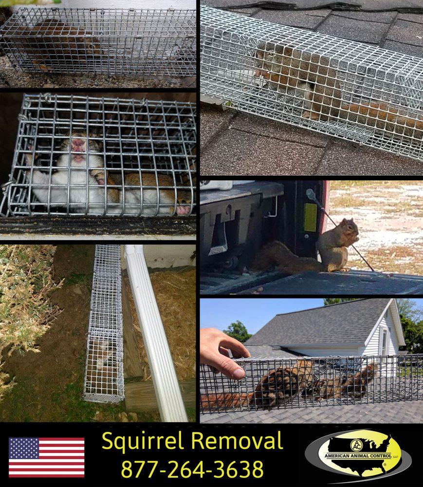 American Animal Control: La Porte, IN