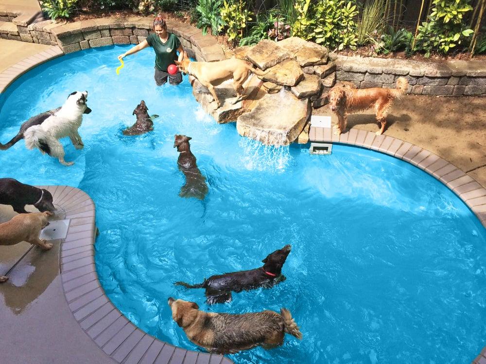Safari Pet Resort 24 Photos 10 Reviews Pet Sitting 1635 Lascassas Pike Murfreesboro Tn