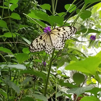 Victoria Butterfly Gardens - 323 Photos & 68 Reviews - Botanical ...