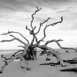 Photo Of Driftwood Beach Jekyll Island Ga United States On The