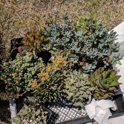 Photo Of A R Nursery Rosemead Ca United States Various Ground