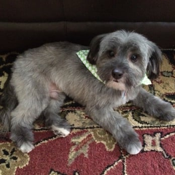 Jeannette s 39 s reviews teaneck yelp for 4 paws pet salon