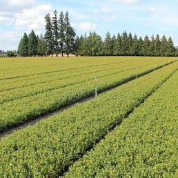 Photo Of Oregon Blueberry Farms Nursery Silverton Or United States Near