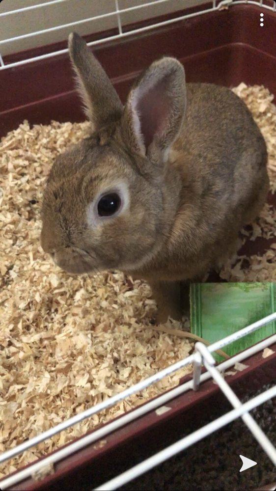 Pet Haven: 37396 Van Dyke Ave, Sterling Heights, MI