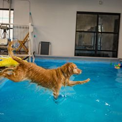 Dog Pool Club - 84 Photos & 38 Reviews - Dog Parks - 1129 Old County