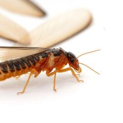 Central Coast Termite