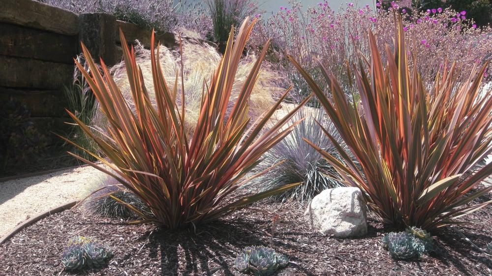 Drought Tolerant Plant Desert Landscape Ideas Yelp