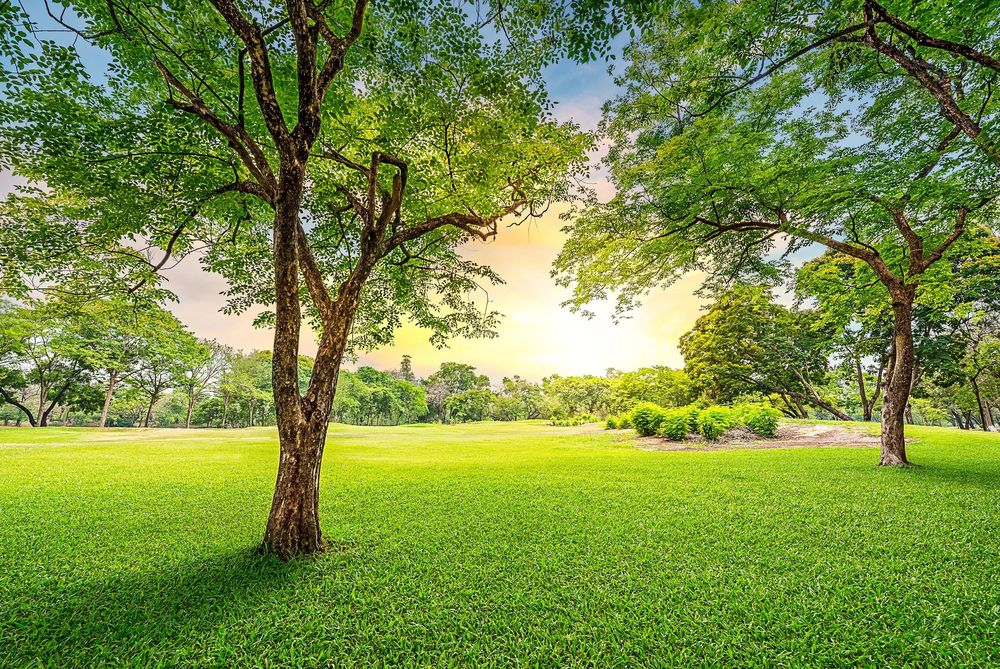 Green Earth Conservation Lawns