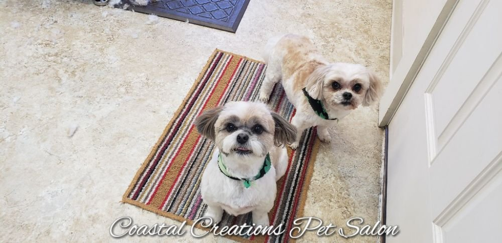 Coastal Creations Pet Salon: 80 Central St, Bucksport, ME