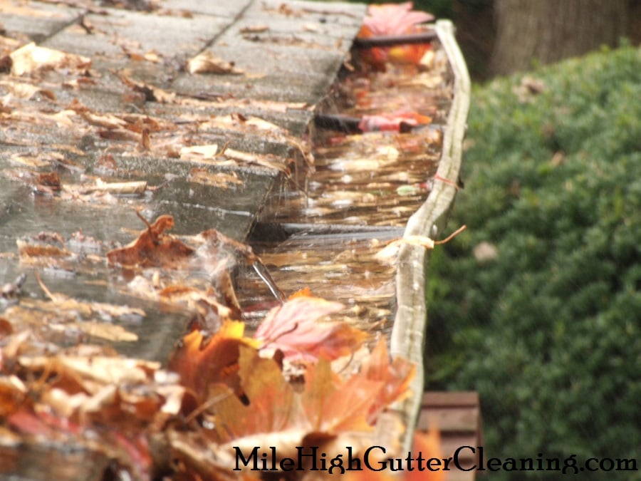 Mile High Gutter Cleaning
