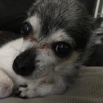 The Pet Clinic - 19 Photos & 32 Reviews - Veterinarians