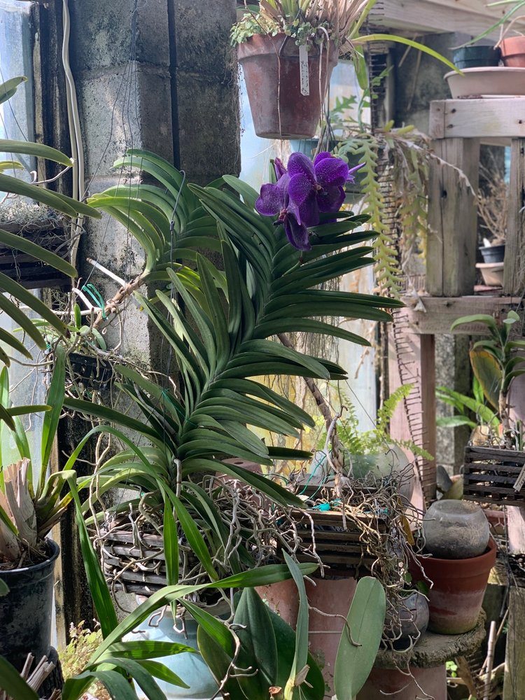 Mutschler's Florists & Rare Plants: 6601 Perkiomen Ave, Birdsboro, PA