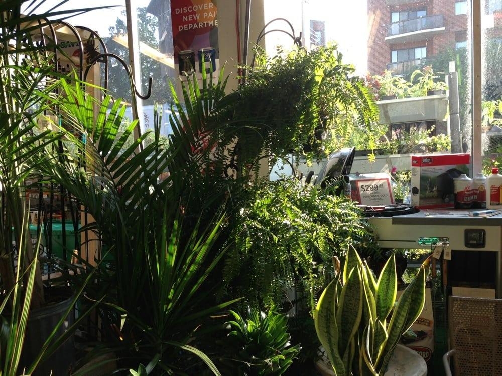 Great indoor plants yelp - Great indoor houseplants ...
