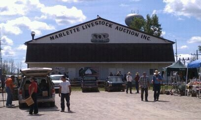 Marlette Livestock Auction: 6381 Euclid St, Marlette, MI