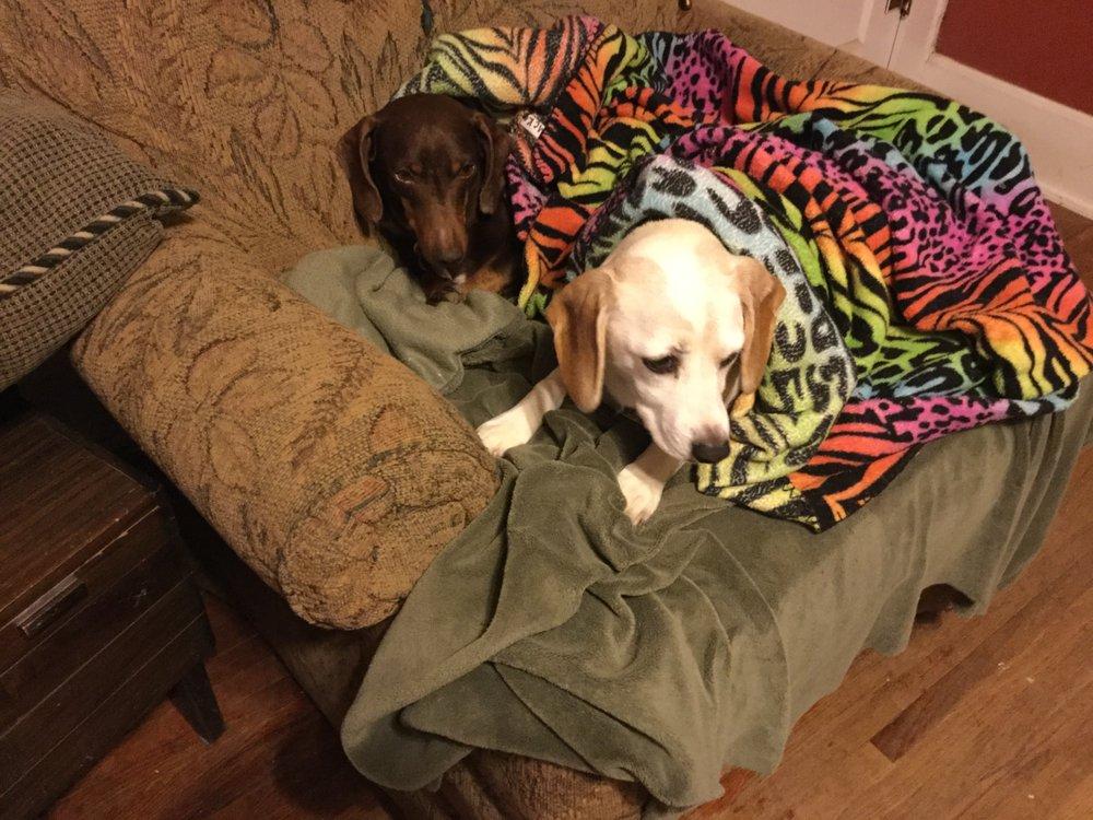 Humane Society of Southwest Missouri: 3161 W Norton Rd, Springfield, MO