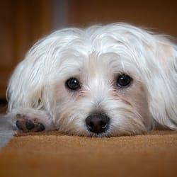 photo of my pet caretaker doral fl united states