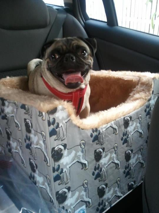 Dog Car Booster Seat Australia