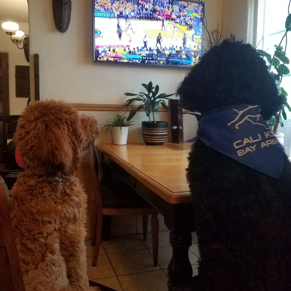 newest 94302 8f0b7 Steph Curry's golden doodle Rookie and labradoodle Rez take ...