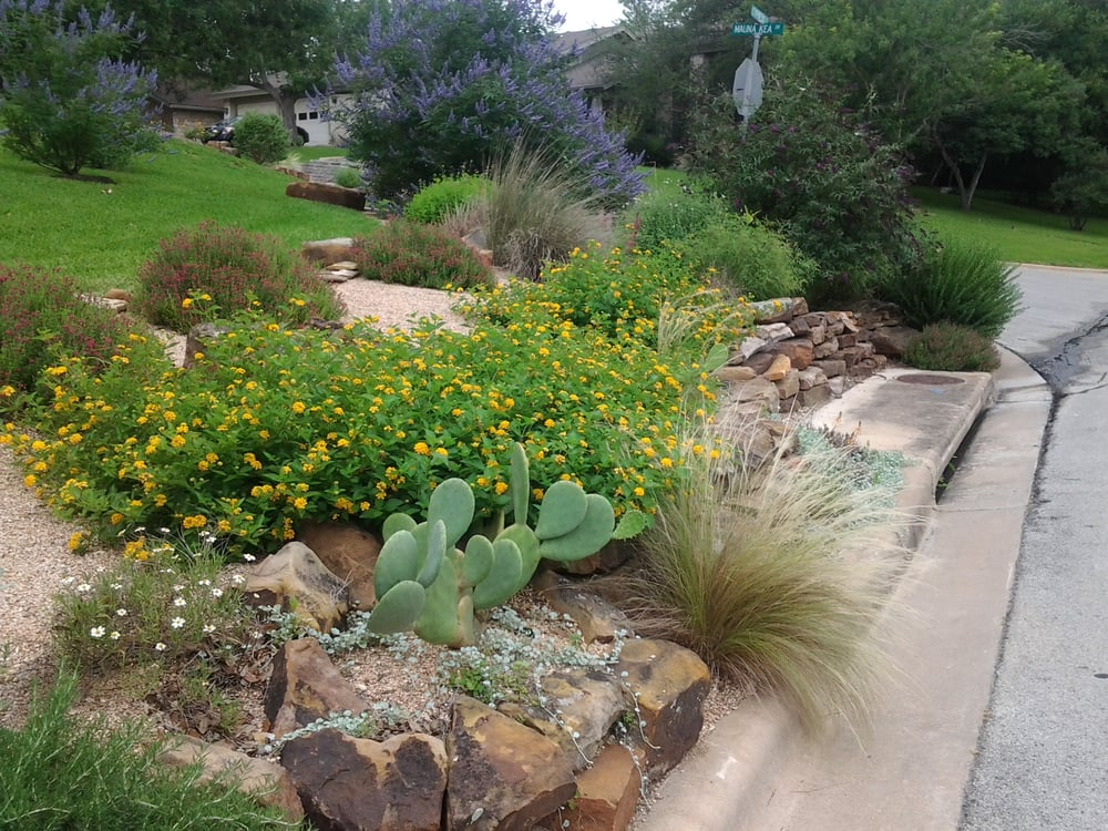 xeriscape design  butterfly and hummingbird heaven filled with texas native plants  moss rock