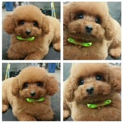 puppy club